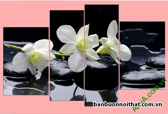 Hoa lan trắng trang trí không gian màu trầm hoặc sáng cho cảm giác tinh khôi