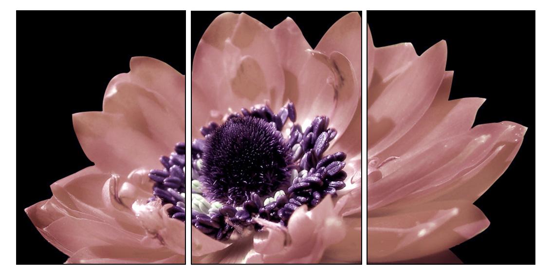 Màu hồng phấn không rực rỡ nhưng cũng đủ để nổi bật và kiều diễm