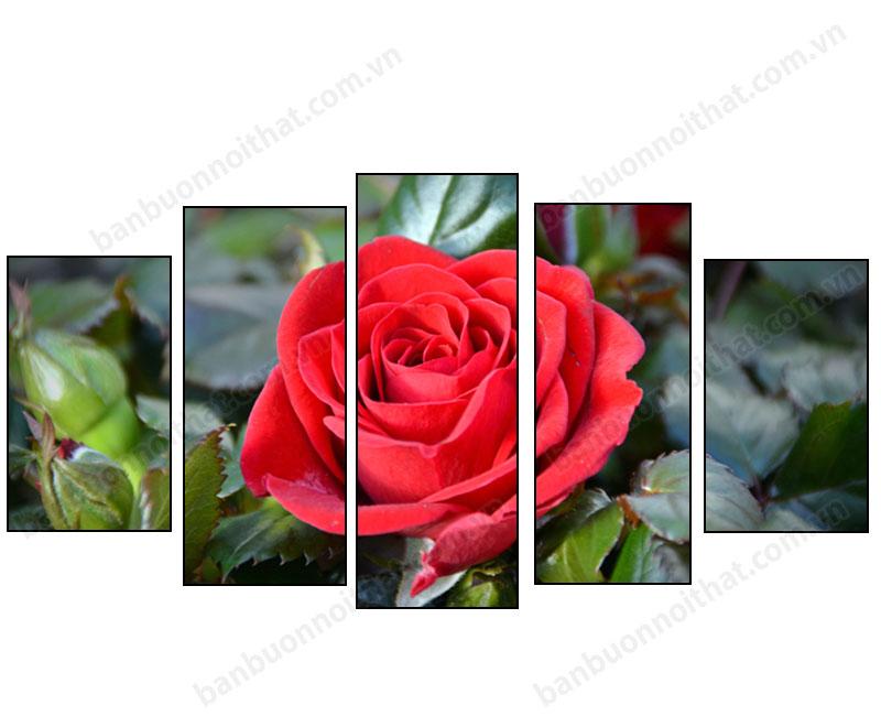 Tranh hoa hồng ghép bộ 5 miếng khổ lớn