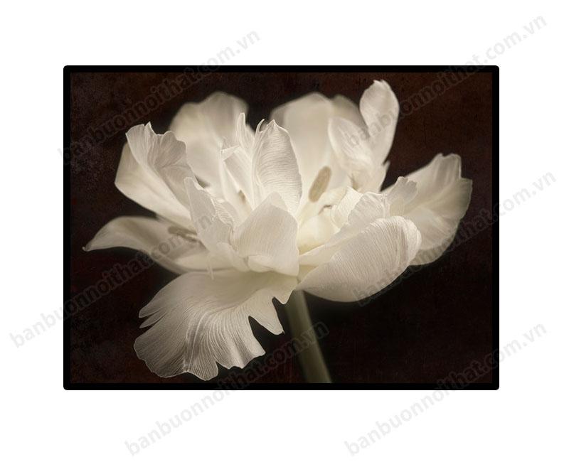 Mẫu tranh hoa đen trắng tinh khôi trang trsi phòng kahsch sạn 5 sao