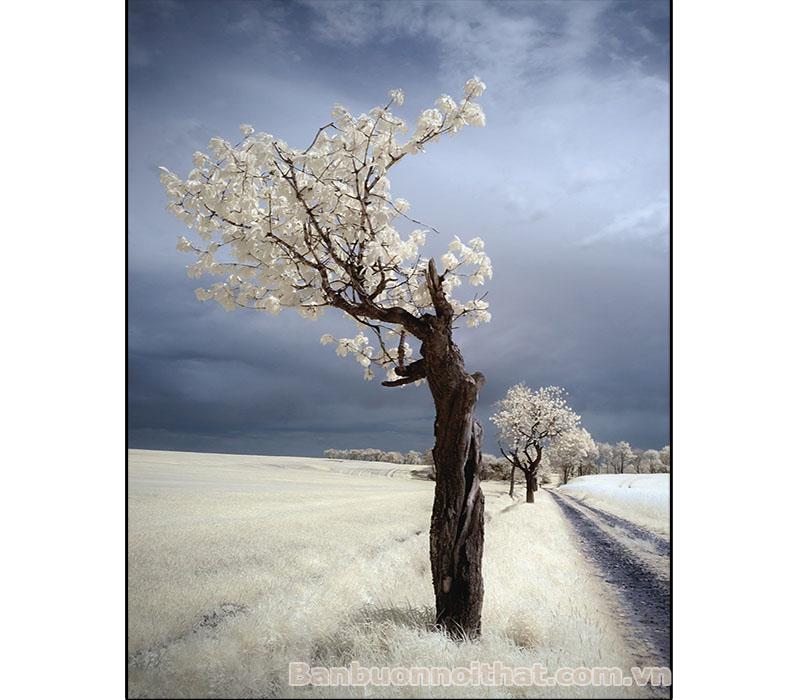 Tranh in canvas decor vẻ đẹp mùa đông